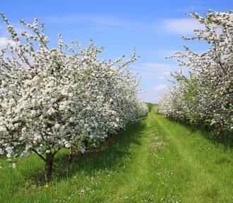 Podsumowanie maja – koniec biegowej wiosny